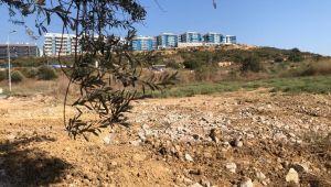 Kuşadası'nda 1500 Yıllık zeytin ağacına bitişik yapılan villa belediye tarafından yıkıldı