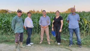 Aydın toprakları dört yeni mısır çeşidi ile tanıştı