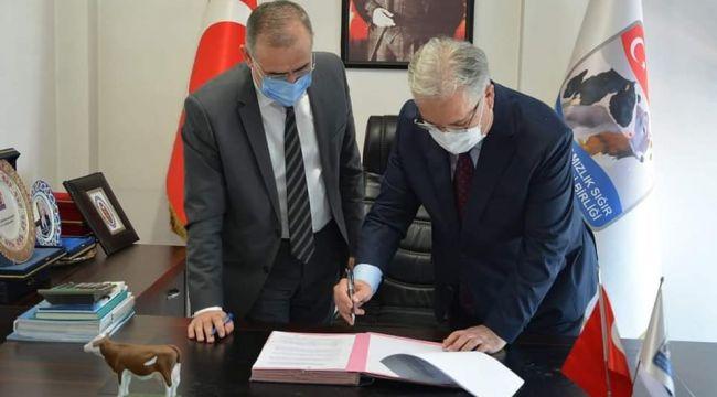 Sığırlar için küpeleme ve kayıt altına alma sözleşmesi imzalandı