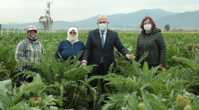 Başkan Atay, enginar hasadına katıldı