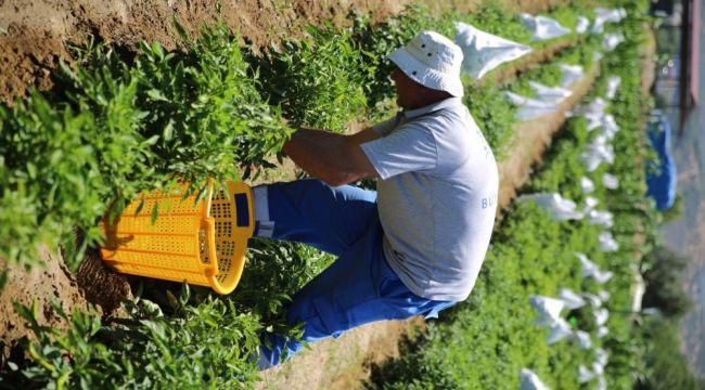 """- Başkan Çerçioğlu: """"Sağlıklı sebzeleri çocuklarımız için üretiyoruz"""""""